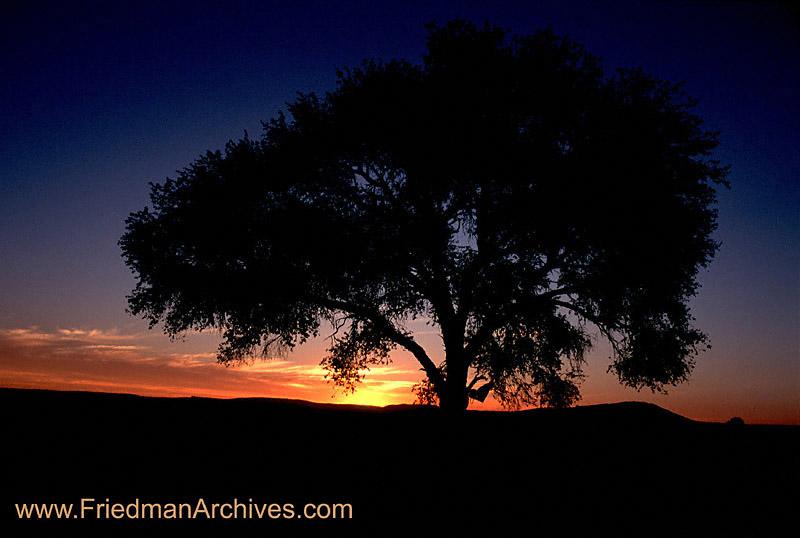 Sunset pictures big tree sunrise