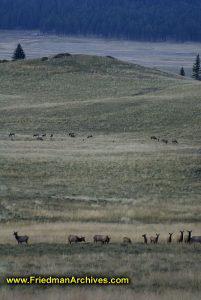 Animals on the Plains