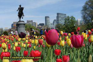 Boston Common in Springtime