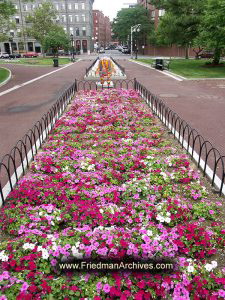 Boston-Flowers