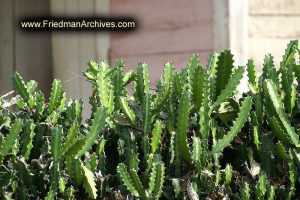 Cactus Fence
