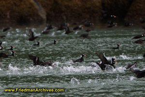 Flock-o-birds