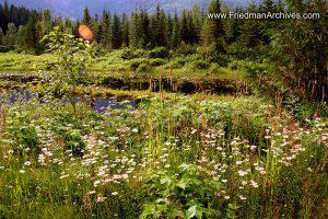 Flowers, Lake, and Sky (Horizontal)