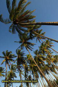 Gazillion Palm Trees - Vertical