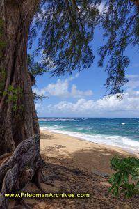 Hanalei Pavilian Beach (Vertical)
