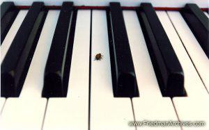 Ladybug on Piano