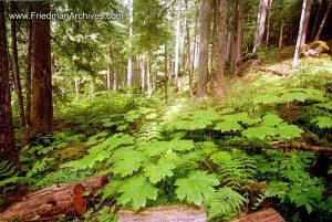 Leaves on Rainforest Floor