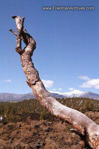 Proud Tree Branch