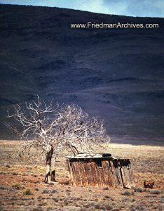 Tree and Shack