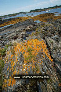 Orange Moss on a Rocky Shore (vertical)