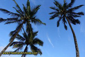Palm Tree Shot