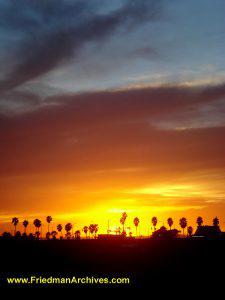 Palm Tree Sunset and Orange Sky