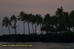 Palm Tree and Setting Sun