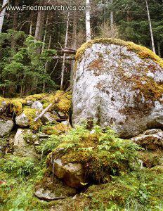Rocks on Forest Floor