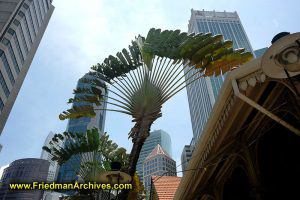 Singapore / Palm Trees