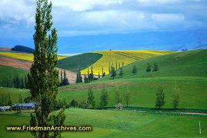 South Island Yellow Landscape