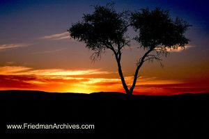 Split Tree Sunset