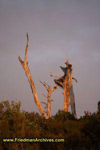Tree Stump at Sunset